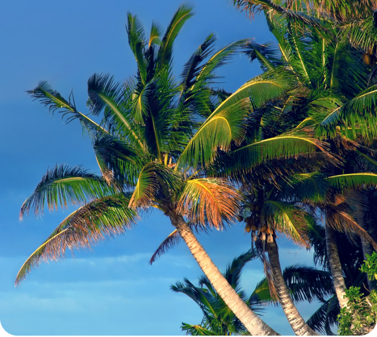 emergenza palme