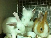 Vendita conigli bari