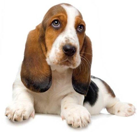 Trattamenti delicati cani
