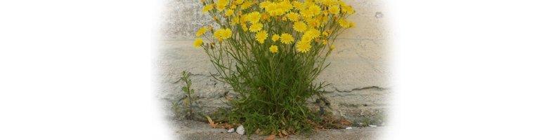 ausmic pest weed control