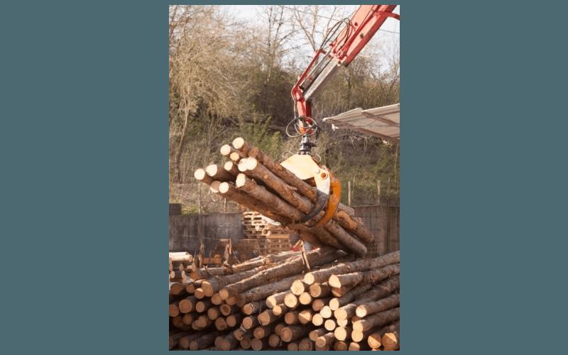 smistamento legname