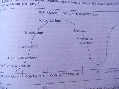 Sviluppo ed evoluzione del ciclo di contatto