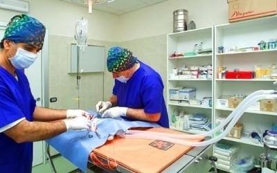 Operazioni chirurgiche veterinarie perugia