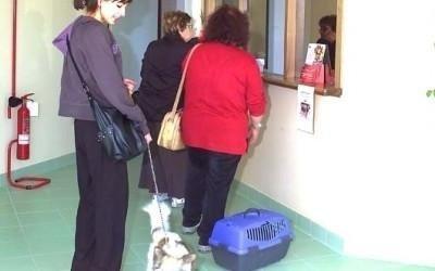 veterinario cani e gatti perugia