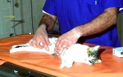 Vaccini per gatti castel ritaldi