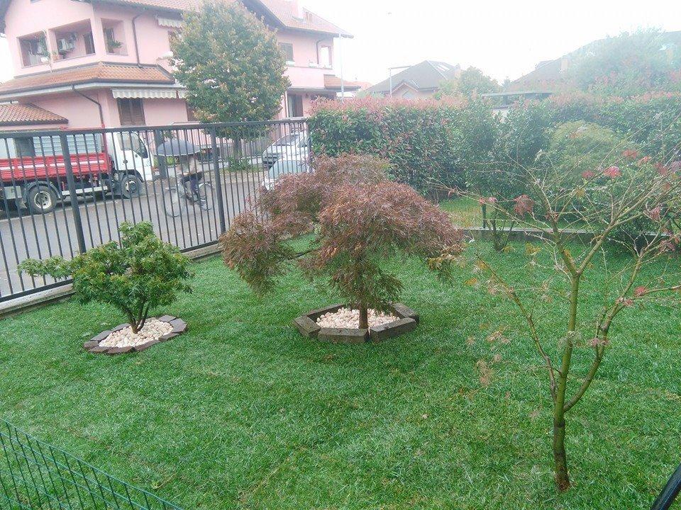 un giardino con un prato verde attorniato da delle ringhiere e della siepe e in mezzo due aiuole con degli alberelli e altri due alberi sulla destra