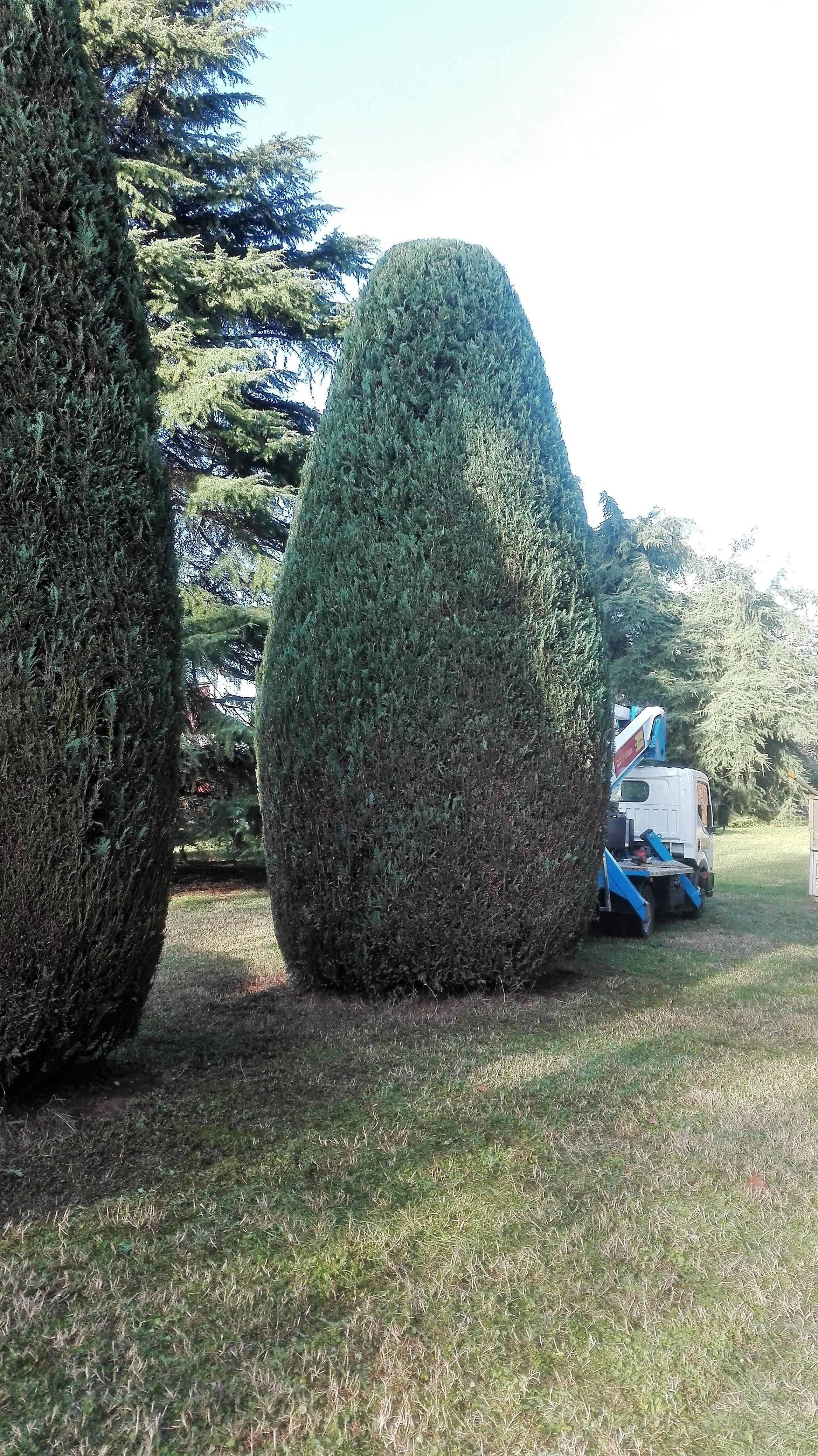 potatura cespuglio verde