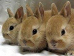 Conigli e animali domestici