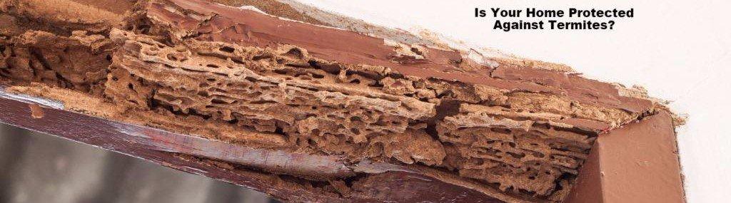 termite control North Attleboro Massachusetts Mansfield Newport RI