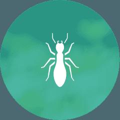 Termite Exterminator Control Service North Attleboro MA, Mansfield MA, Braintree MA, Warwick RI, Newport, RI