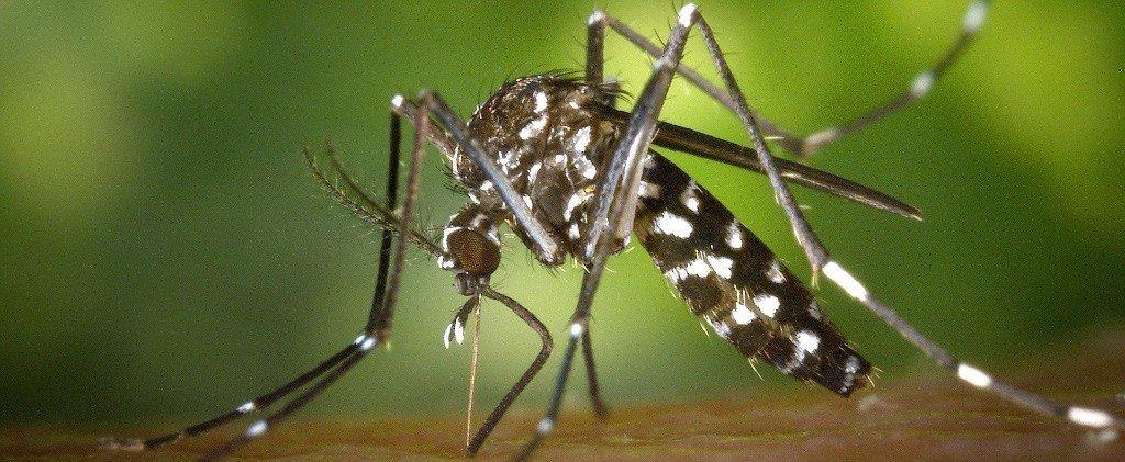 Mosquito & tick control experts North Attleboro, Mansfield, Braintree Massachusetts Newport County RI