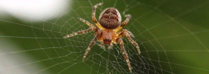 pest control experts Massachusetts
