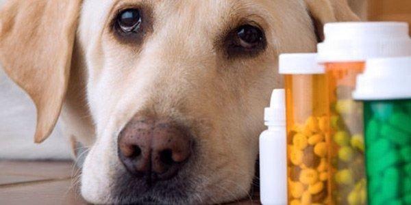 farmacia veterinaria, farmaci veterinari, Viterbo