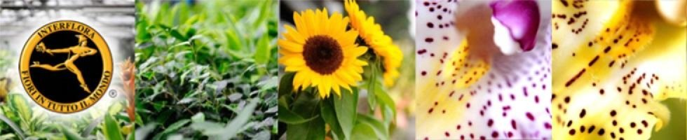 Mancini fiorista Interflora
