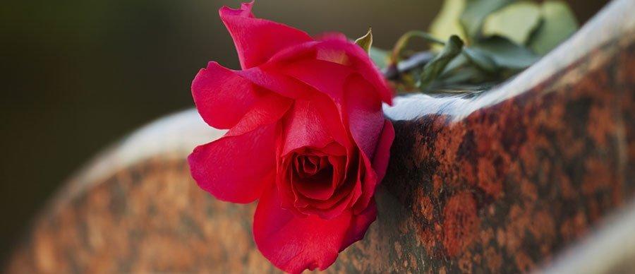 rosa fiore rosso