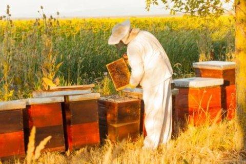 produits pour apiculteurs