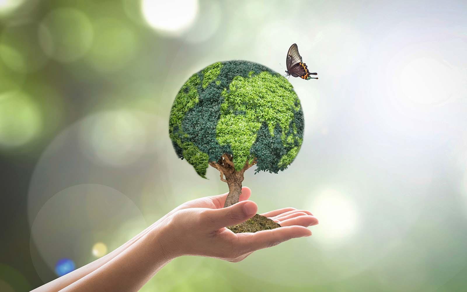 Verde a forma di globo pergolato piantagione di alberi sulla femmina mano umana con la farfalla