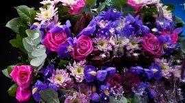 trattamento piante e fiori, vendita piante e fiori, commercio piante e fiori