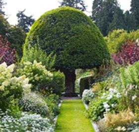 Wholesale plants - Loughton, Essex - Harry Fairhead Ltd - Shrub