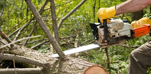 specialised tree service and stump removal worker cutting tree