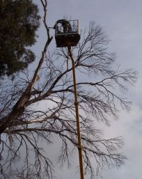 specialised tree service and stump removal tree removed using crane
