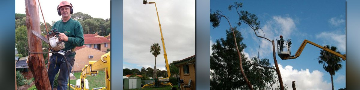specialised tree service and stump removal tree cutting using crane