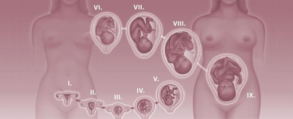 ginecologia e ostetricia Catellanza (VA)