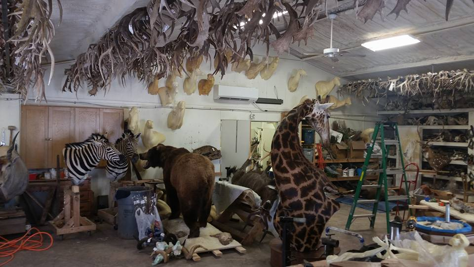 Big Game Taxidermy Midland, TX