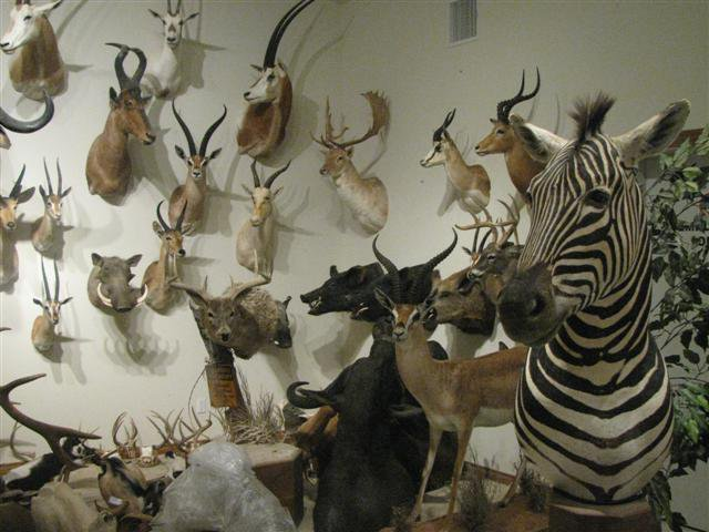 General Taxidermy Odessa, TX