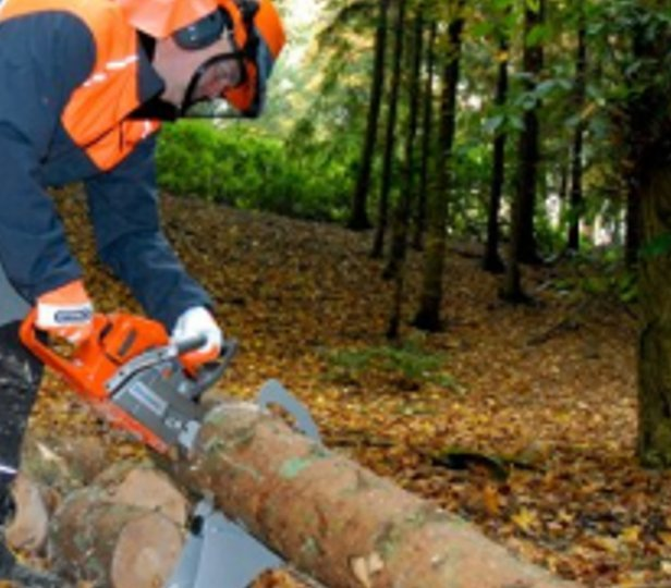 Professional Tree Pruning Forestry And Landscaping Works