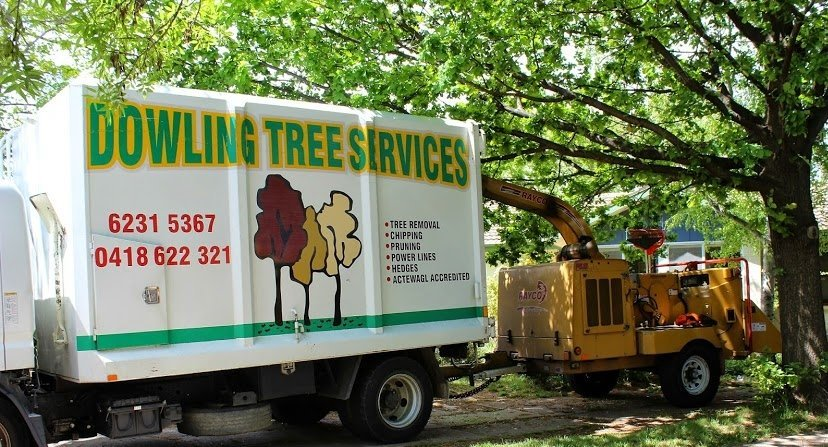 tree services in canberra