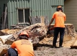 Arborist performing stump grinding in Canberra