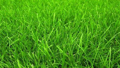 Formazione tappeto erboso