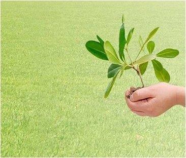 cura verde privato