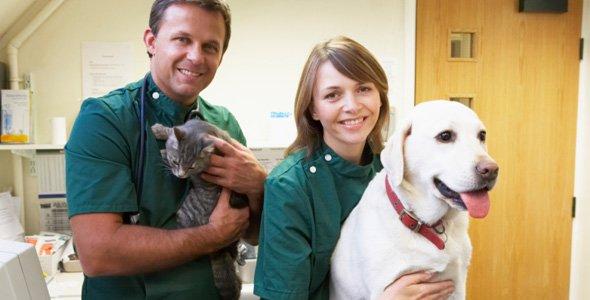 Friendly team of vets in West Moonah