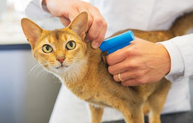Microchipping at Veterinary clinic in West Moonah