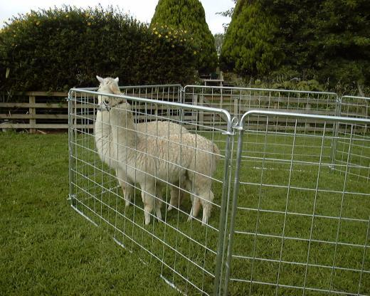 Dtd Fence Hire Amp Sales Portable Animal Yards New Zealand