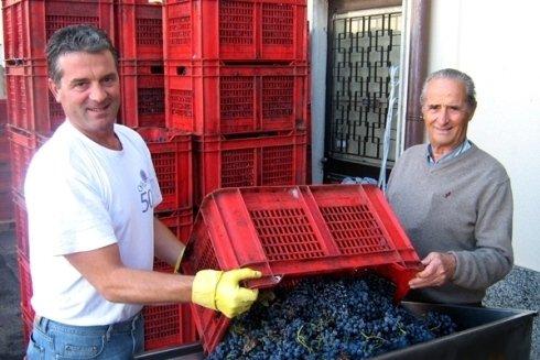 Prime fasi della lavorazione dle vino.