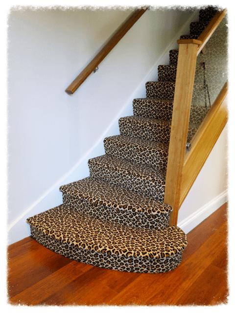 Zoo Cheetah