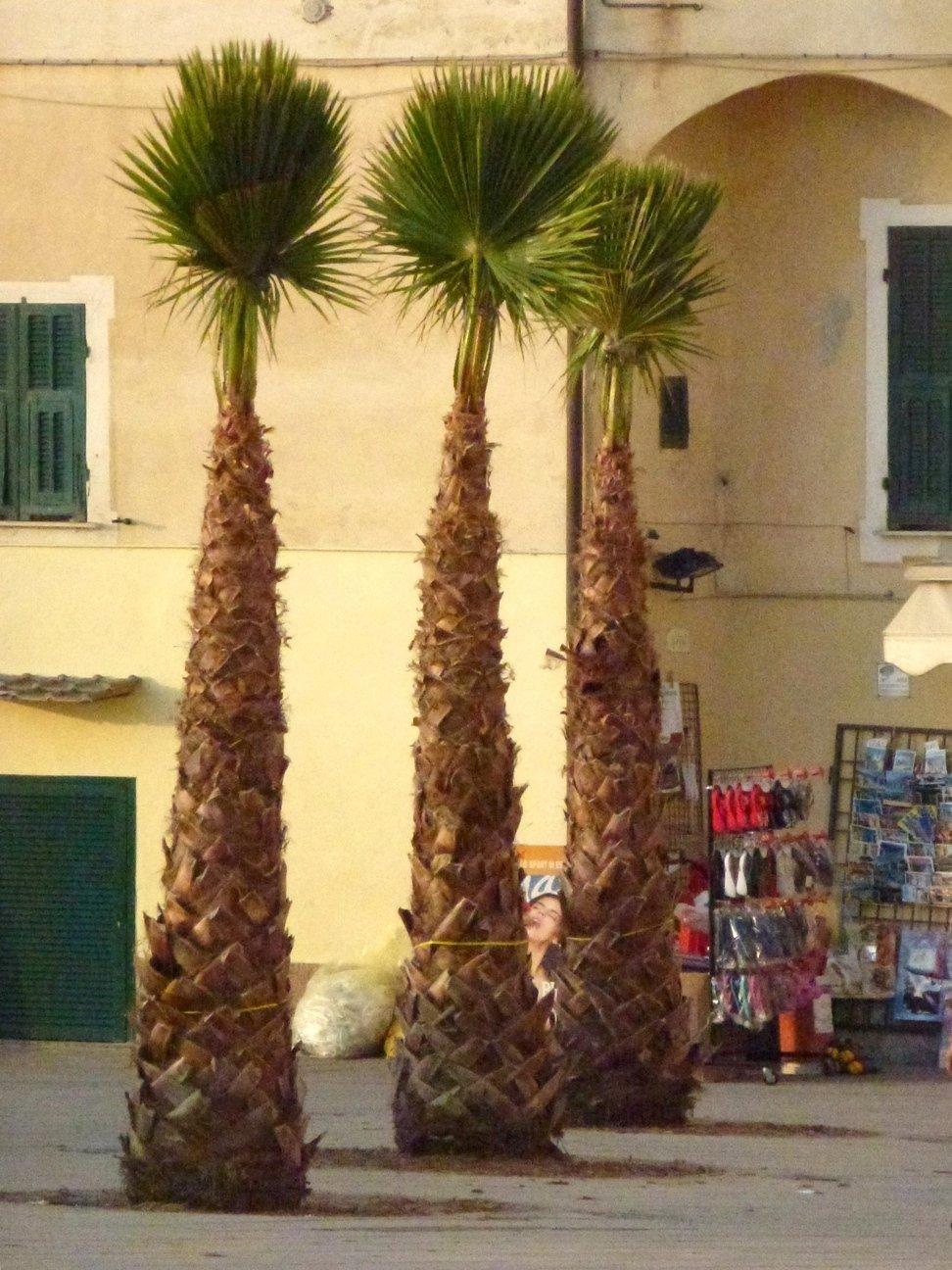 sostituzione palme
