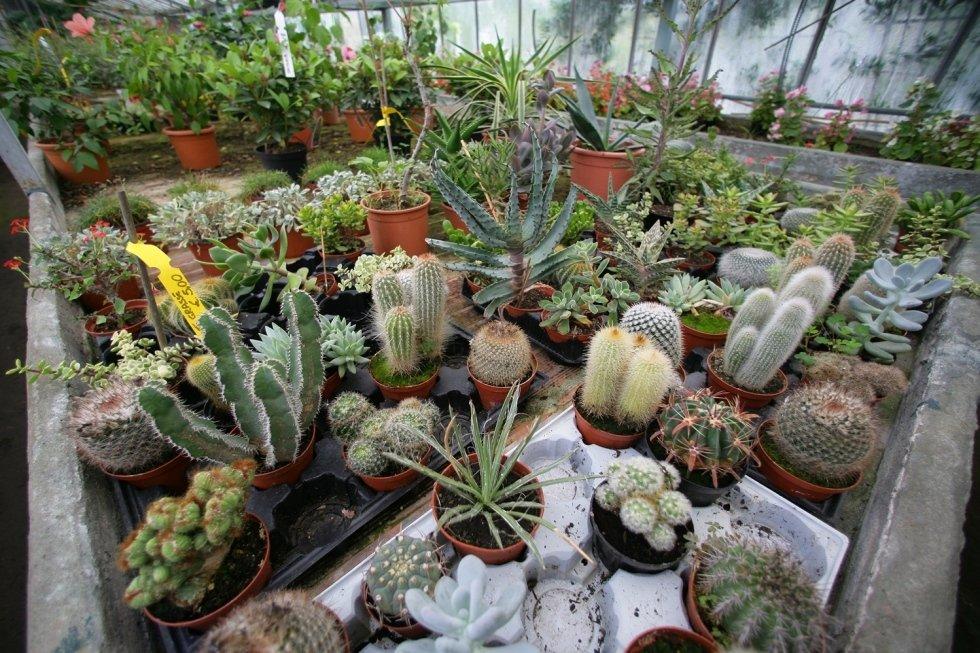fiori e piante da giardino