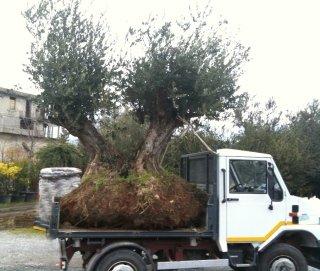 Movimentazione alberi