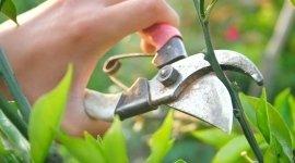 pulizia piante fusto lungo