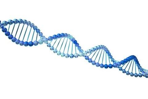 determinazioni DNA