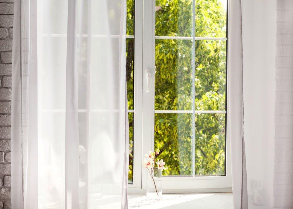 finestra con fogli verdi