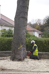 Tree surgery projects