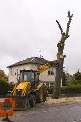 Tree cutting work