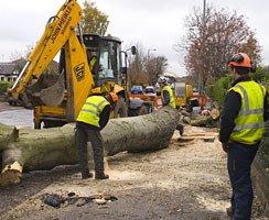 Tree removing