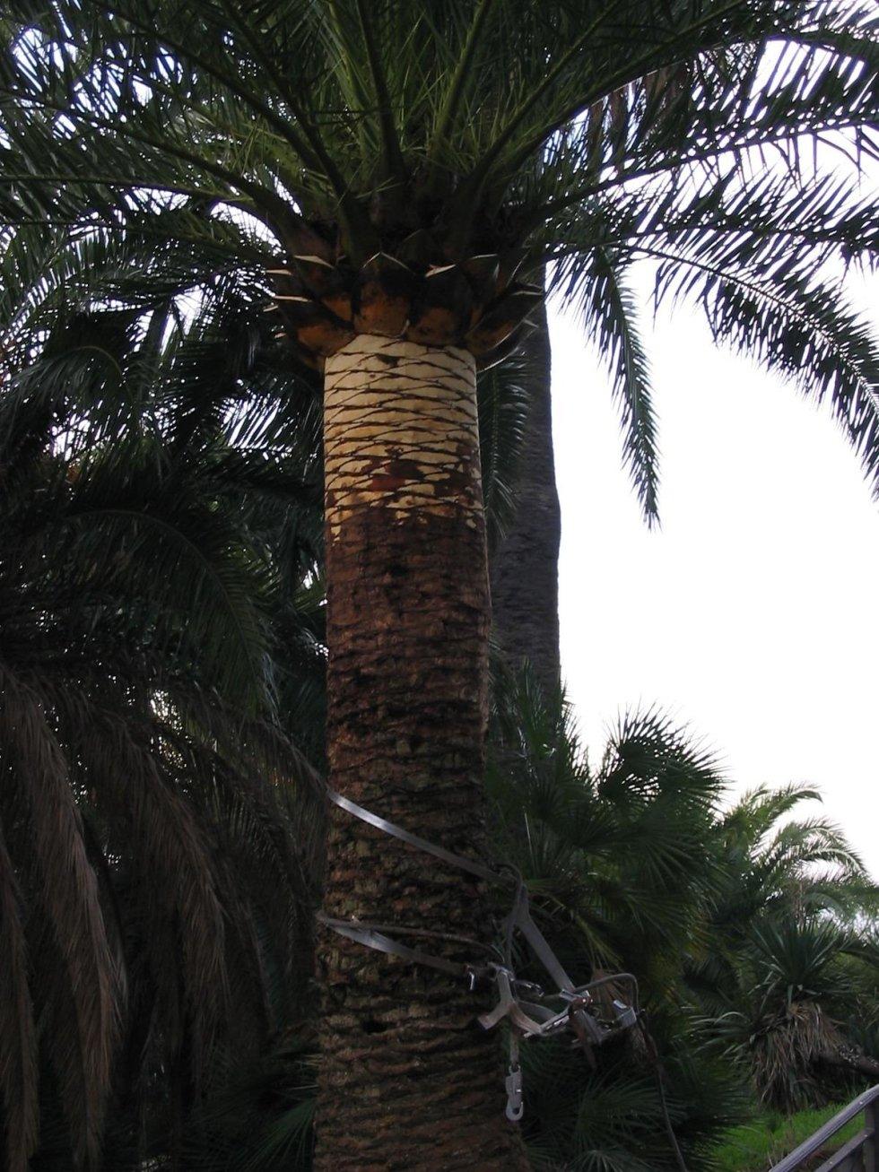 termine lavoro pulizia palme