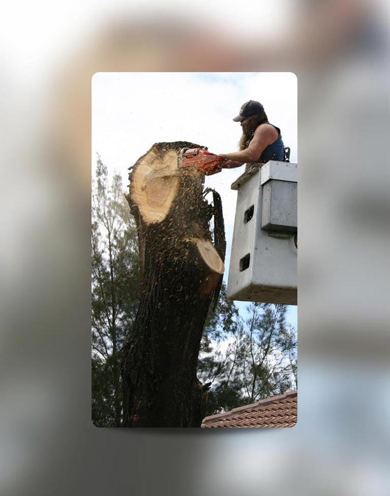 c and d schroeder tree services man sawing